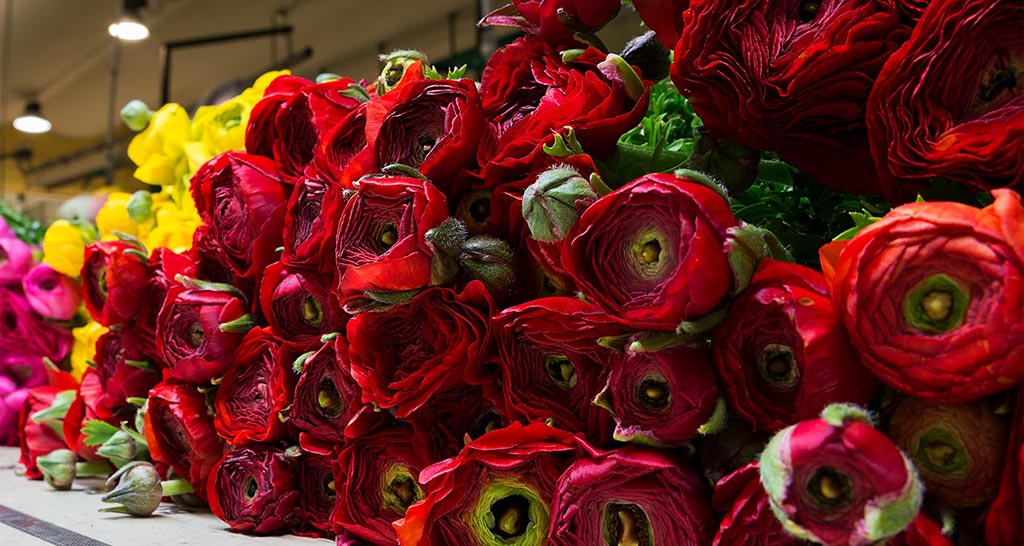 CS Flowers in Italy
